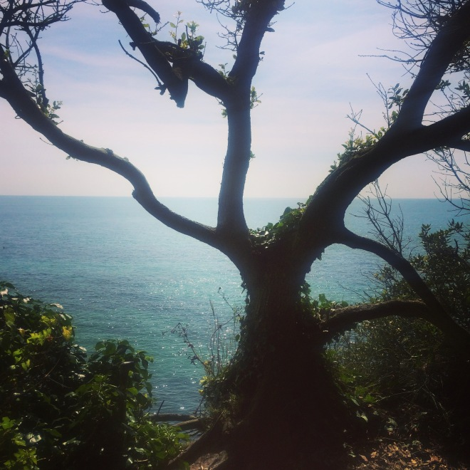 View from the coastal path, Ventnor