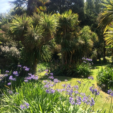 Palm Garden at Ventnor Botanic Garden