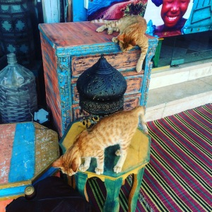 Cats playing outside Why Not - a great little shop in Dahab.