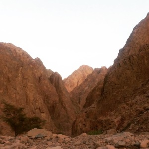 Wadi Qunai, an oasis in the Sinai mountains, south of Dahab